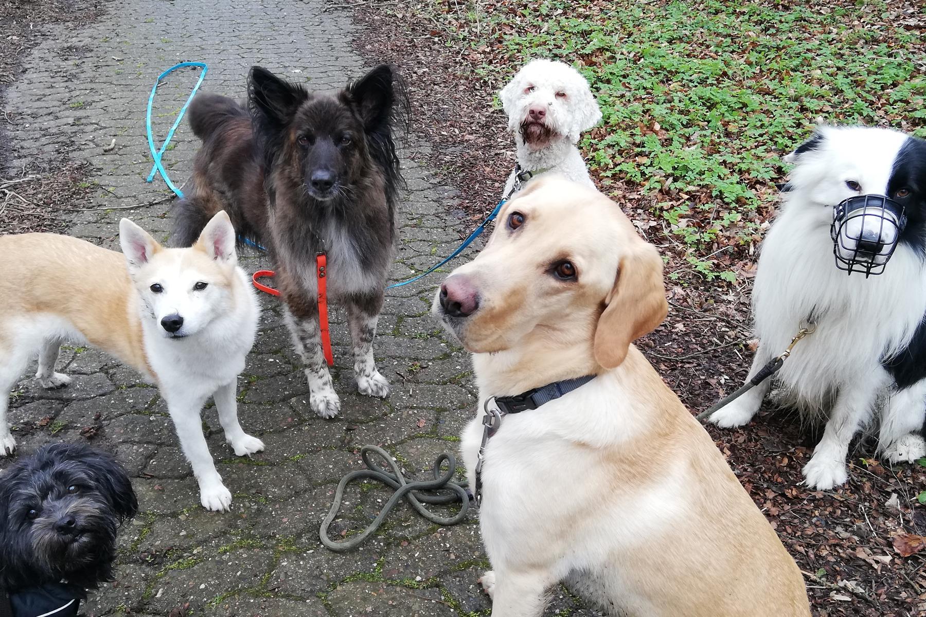 mensch-zu-hund-dog-walking